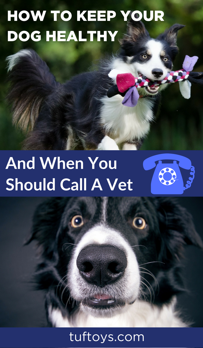 When is the right time to see a vet