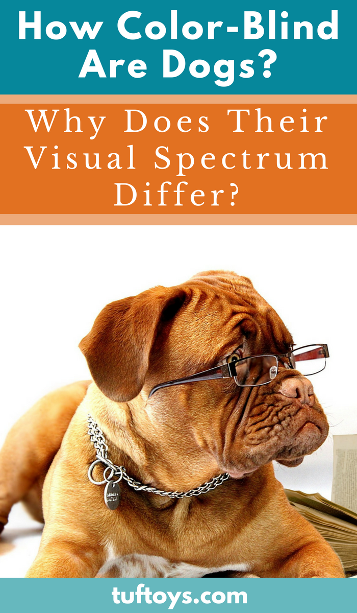 How color blond are dogs and why does their visual spectrum differ