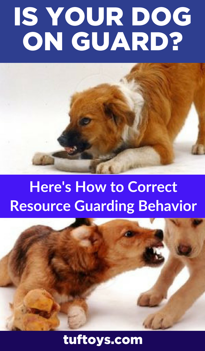 A complete guide on how to correct your dog's resource guarding behavior