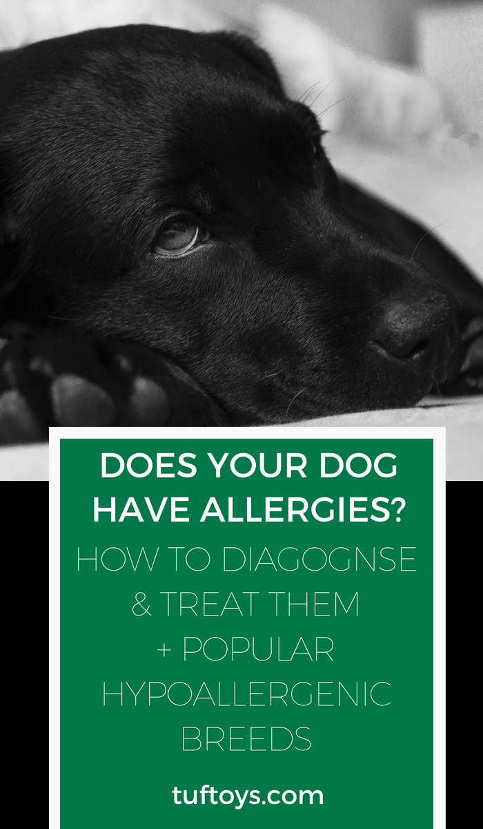 How do you diagnose your dog's allergies and treat them with vaccinations