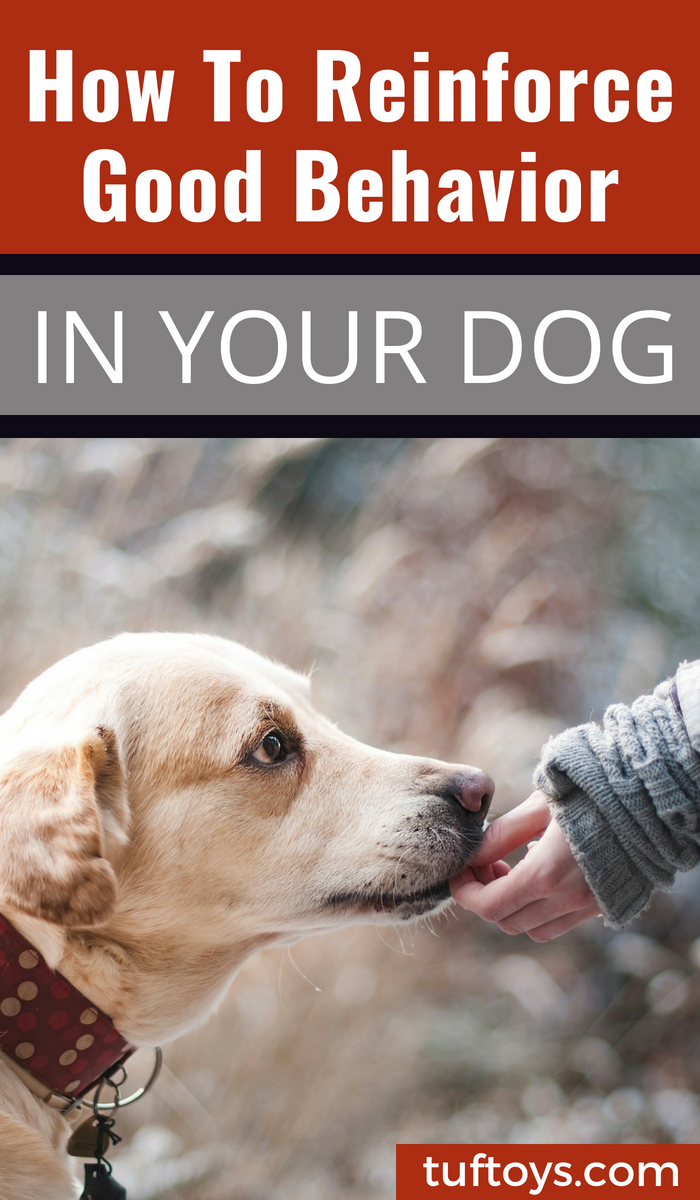How to reinforce good behavior in your dog