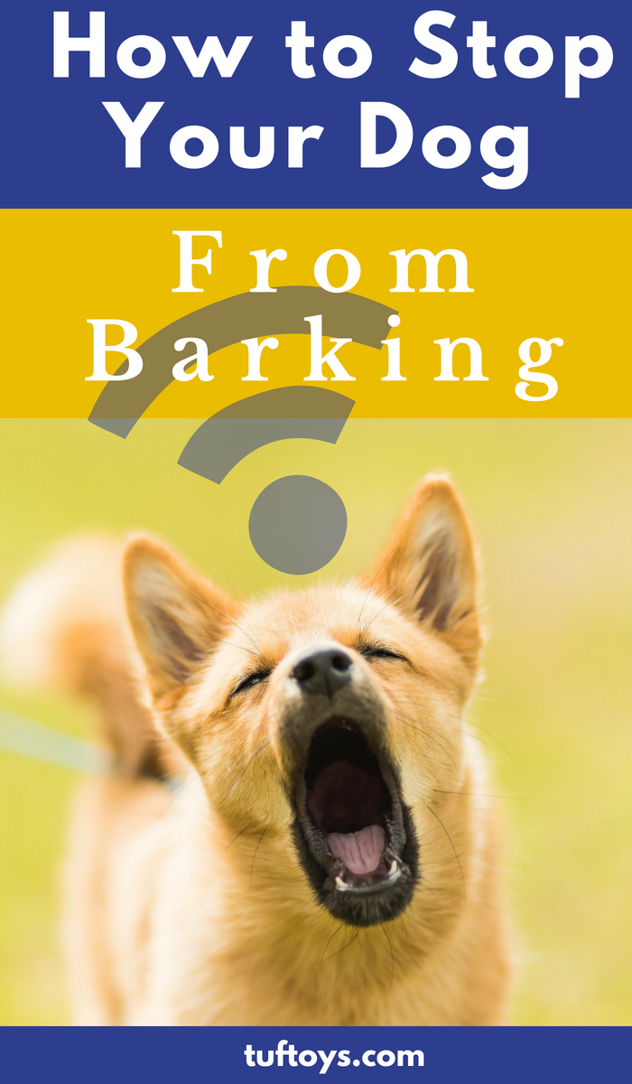 How to stop you dog barking advice and tips