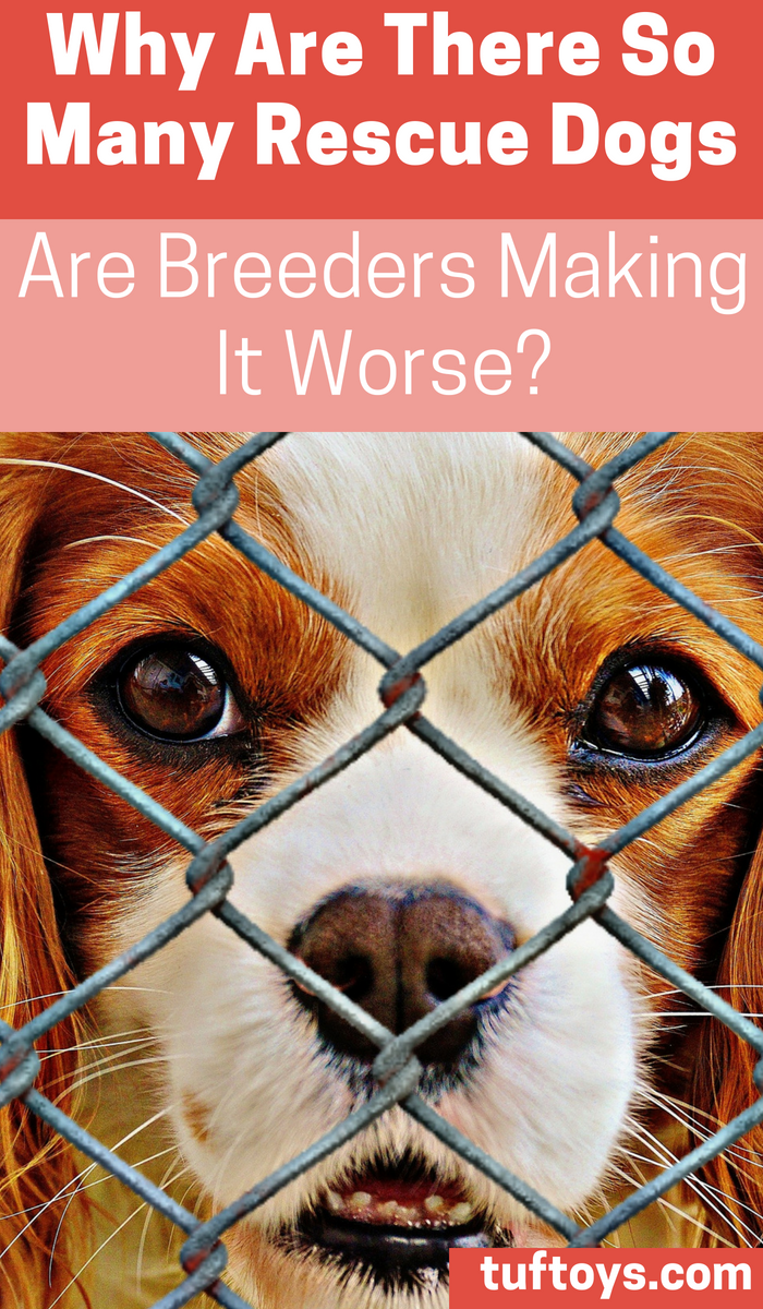 Why are there so many rescue dogs and are breeders making it worse