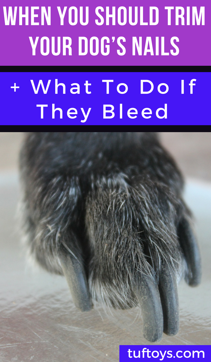 When should you trim your dog's nails and what to do if they bleed