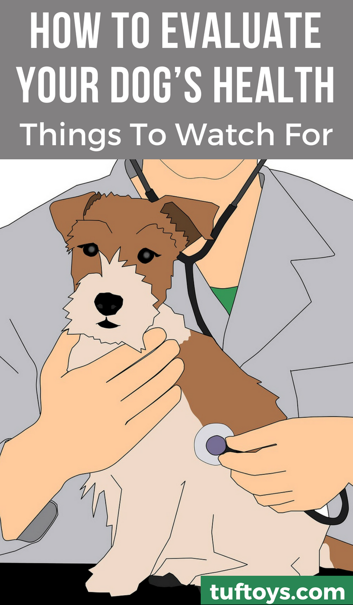 Things to look out for when evaluating your dog's health