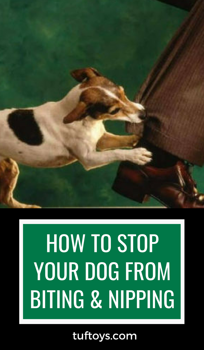 Hot to stop your dog from biting and nipping