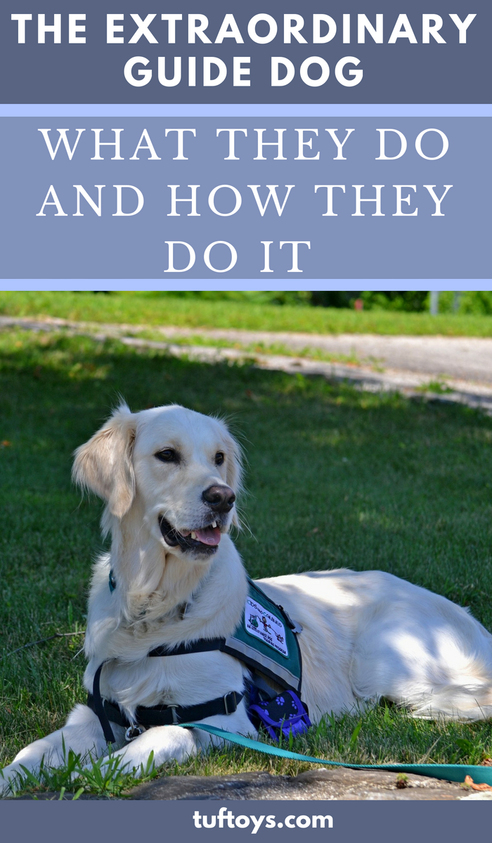 What and how the extraordinary guide dog do what they do