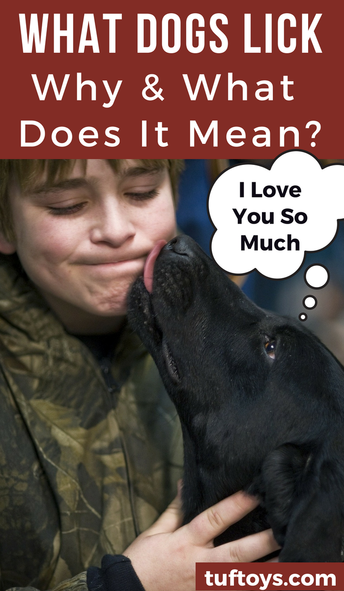 Why and what do dogs lick and what does it mean