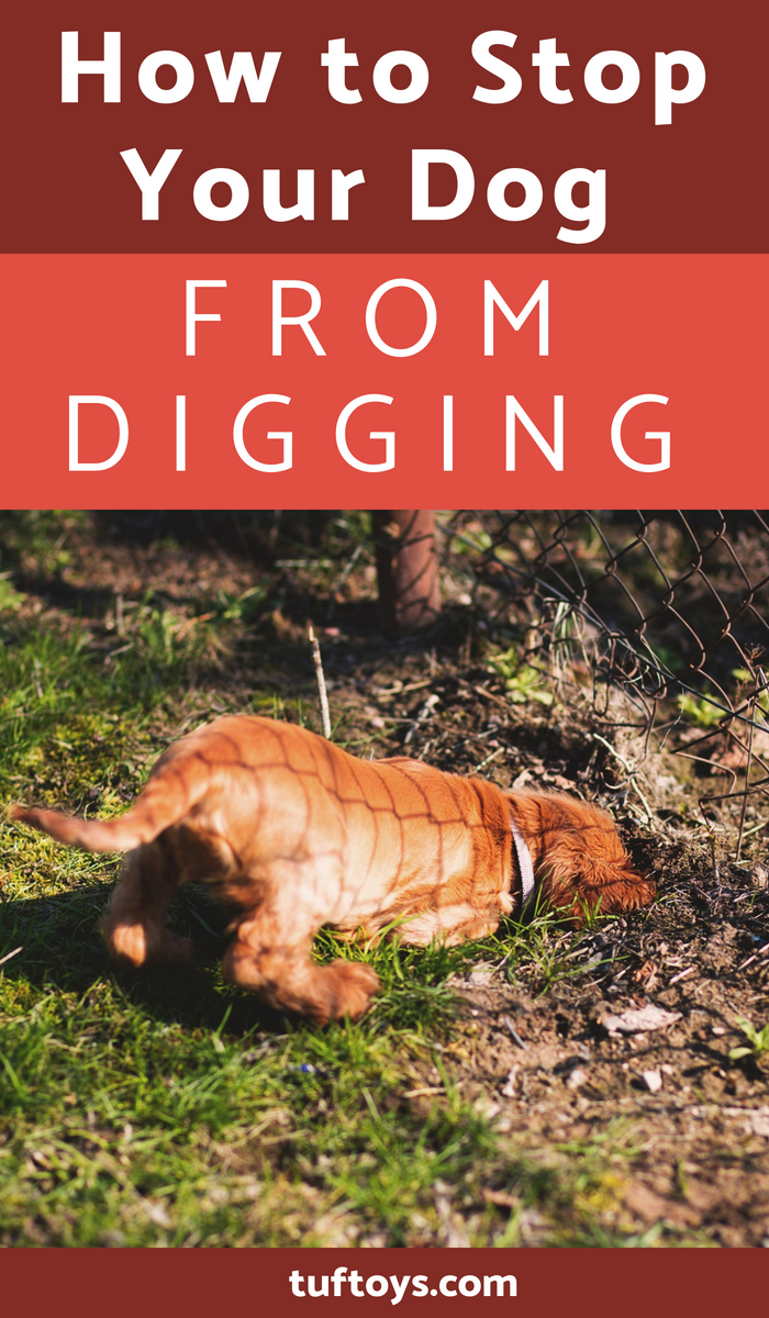 How to stop your dog from digging up the garden