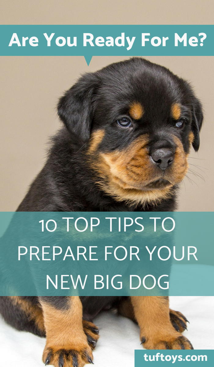 10 top tips tp prepare for your new big dog