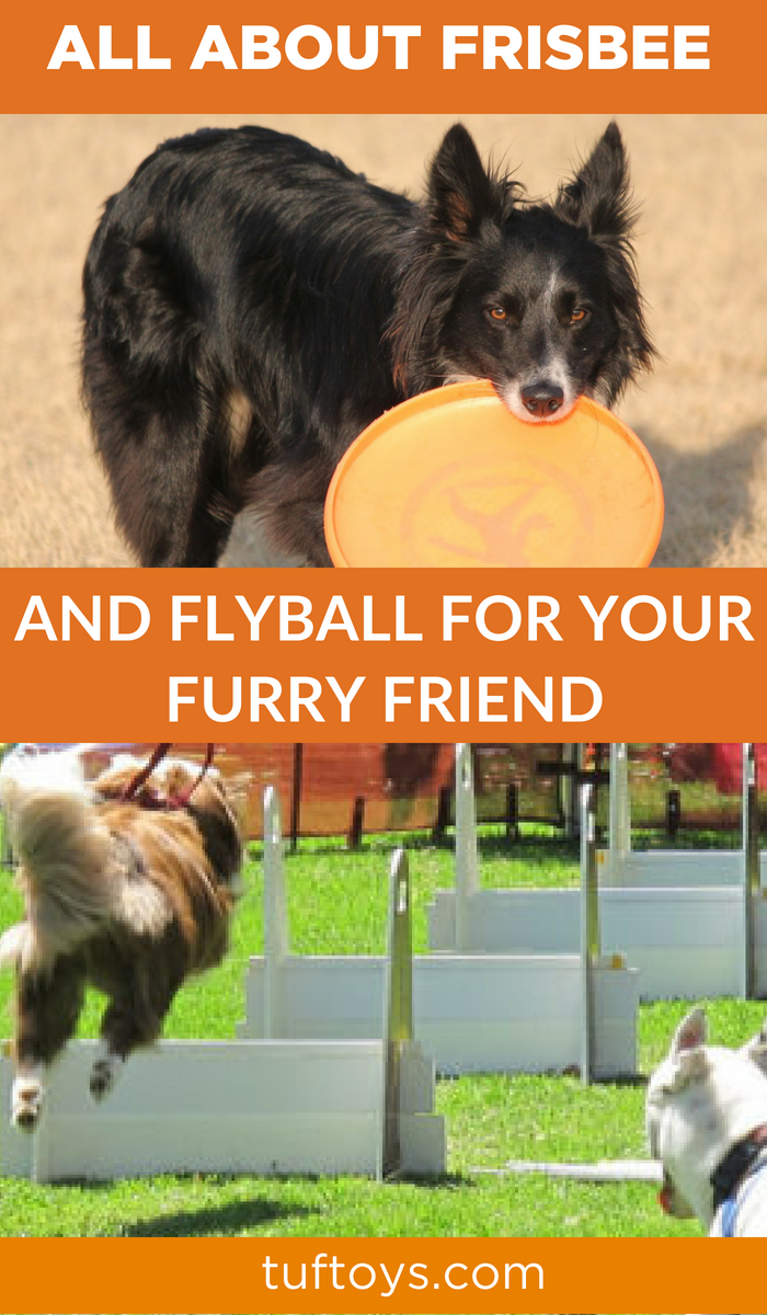All about frisbee and flyball for your furry friend