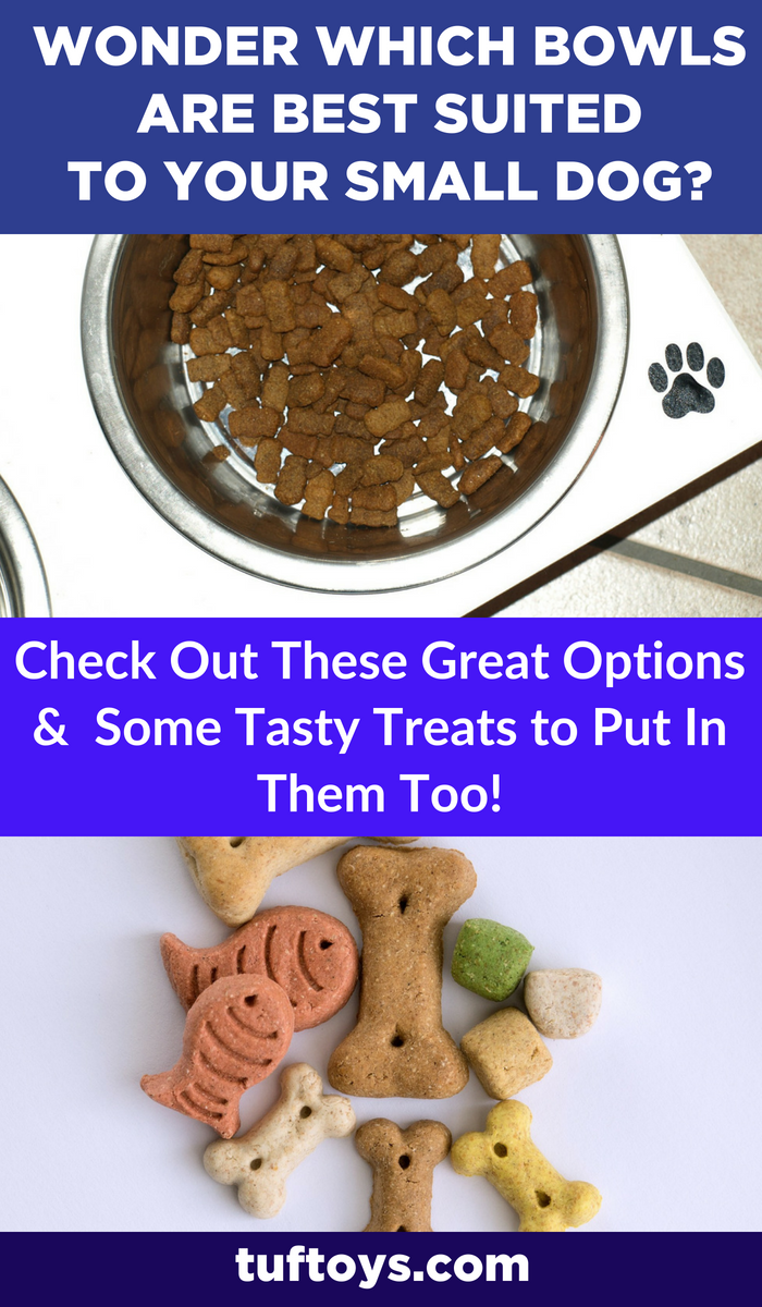 Which dog bowls are best suited to your small dog?