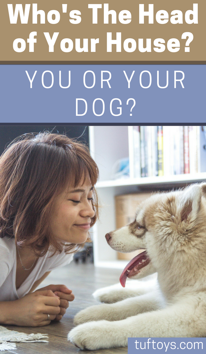 Is you or your dog the head of your house?