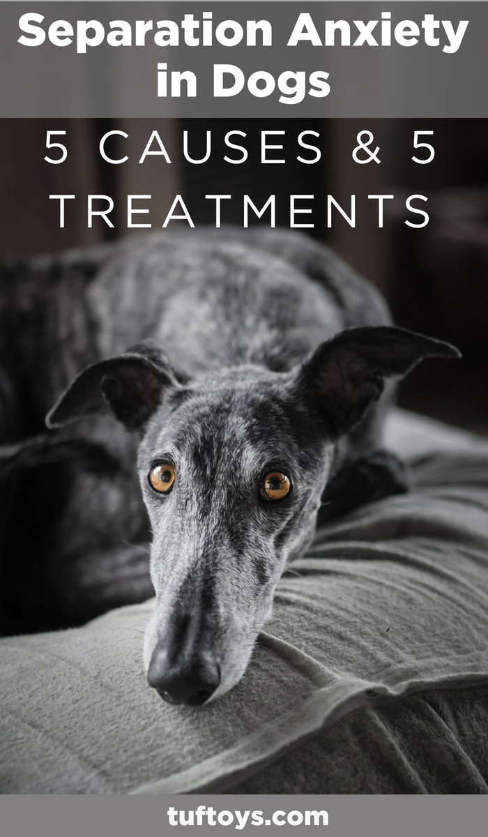 help greyhound with separation anxiety
