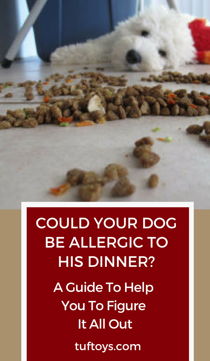 Could your dog be allergic to his dinner?