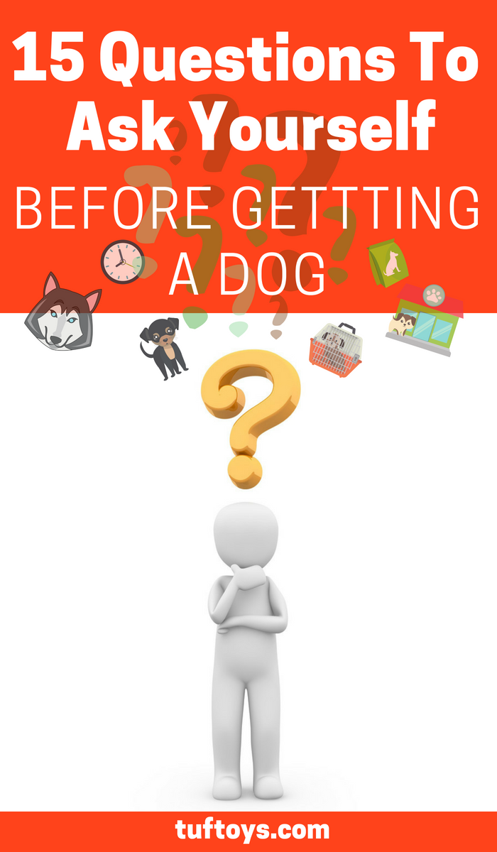15 crucial questions to ask yourself before getting a dog