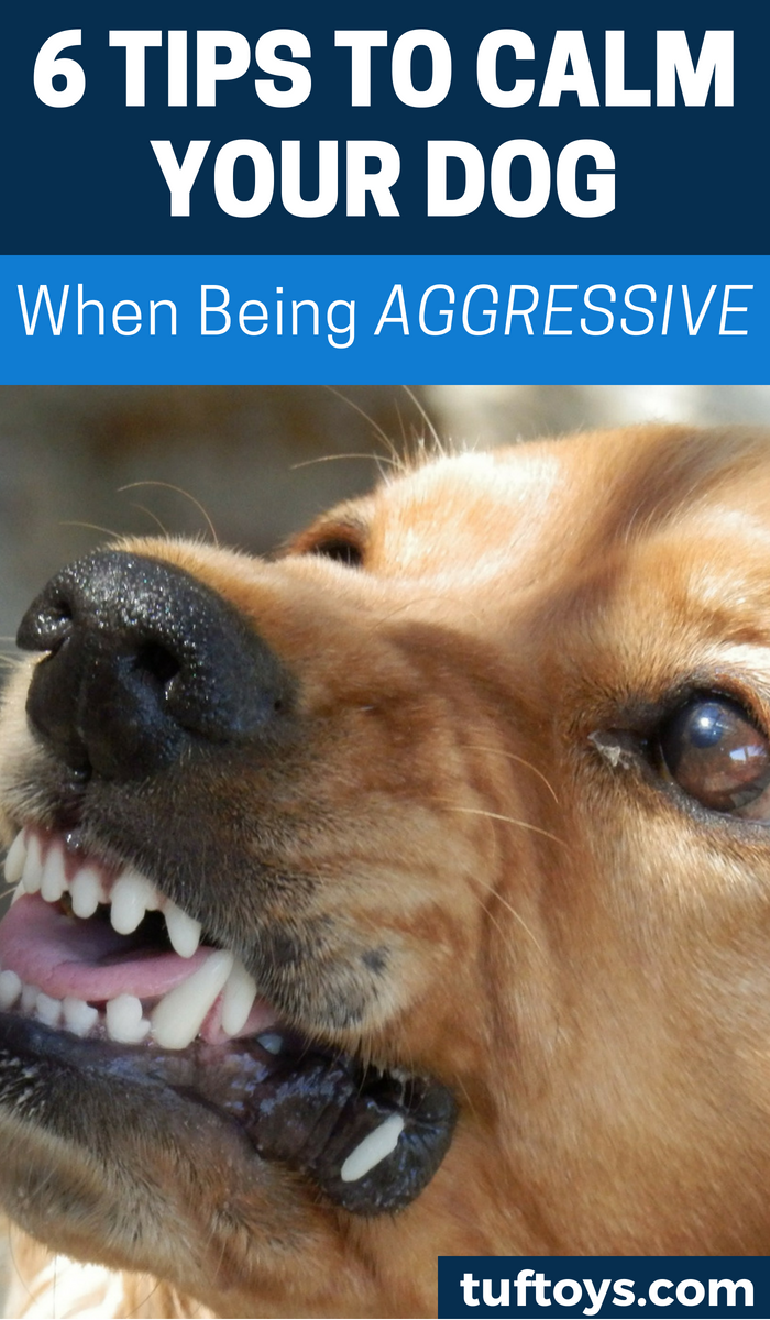 6 tips to calm your dog if being aggressive