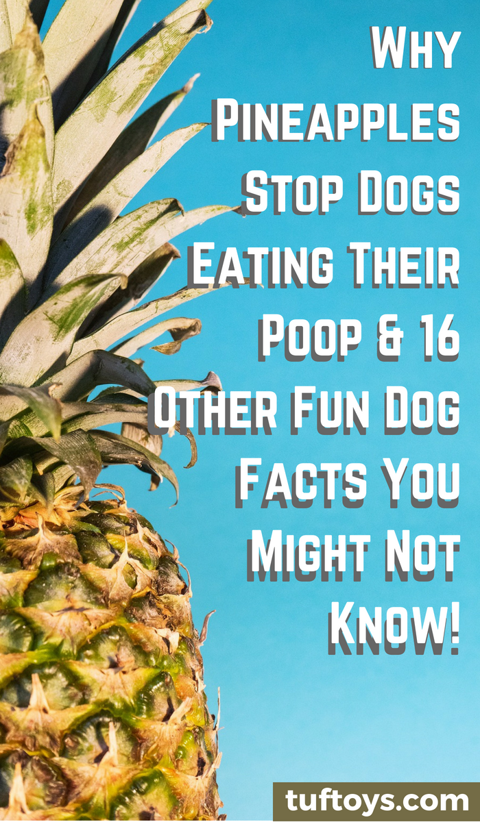 Why pineapples stop dogs eating their poop and 16 other fun dog facts