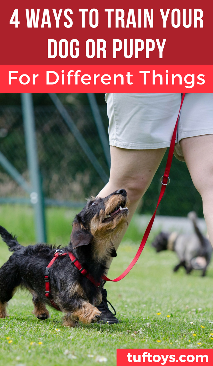 4 ways to train your dog or puppy for different objectives