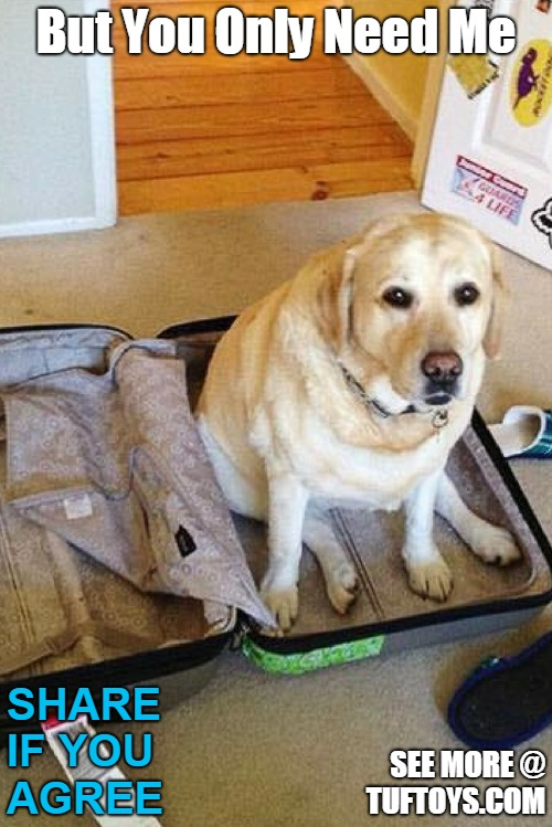 adorable labrador trying to persuade her owner there is no need to pack anything but her