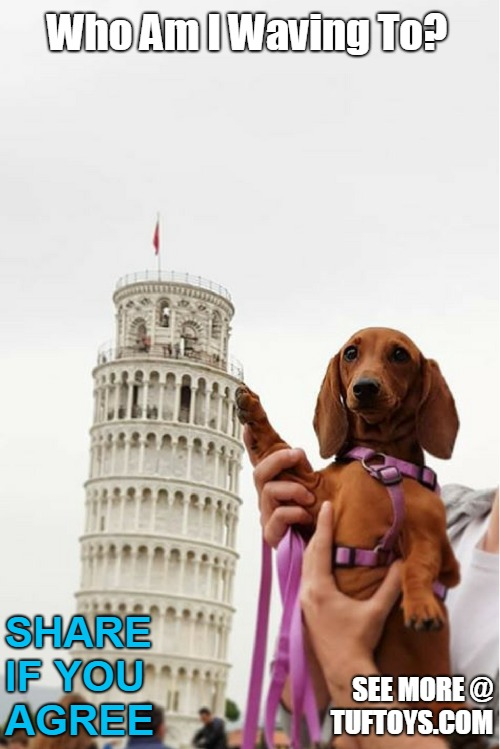 amusing picture of a dachshund who doesnt seem to realize the gravity of the photo op being taken