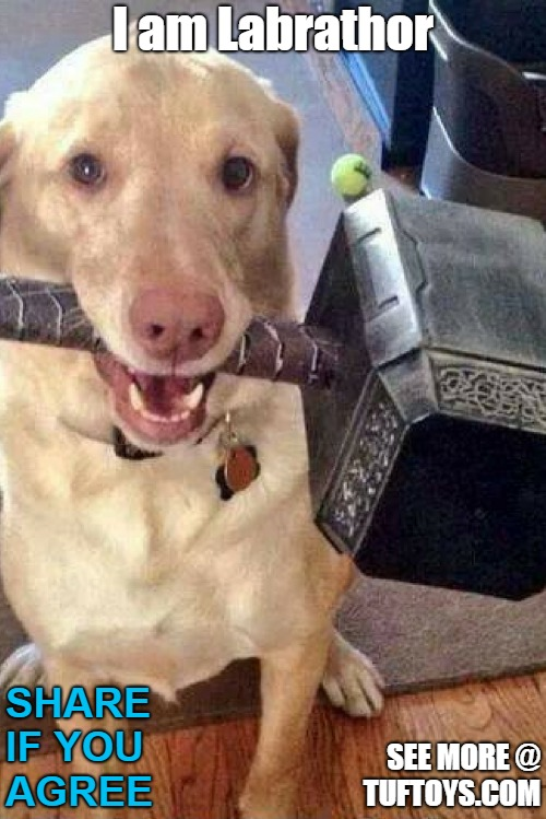 cute labrador dog holding Mjolnir, Thors hammer, creating the pun labrathor