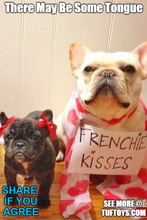 cute pic of two frenchies offering french kisses, possibly in exchange for treats