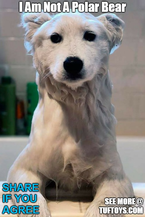 cute picture of a dog covered in soap suds and temporarily looking like a polar bear