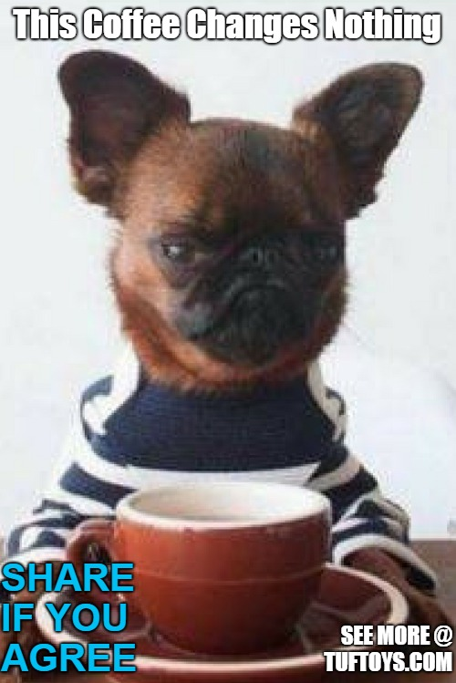 cute picture of grumpy looking dog whose bad mood refuses to be appeased with coffee