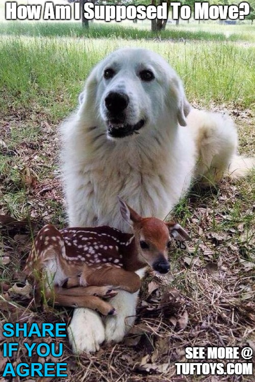 cute picture of labrador unable to move due to an even cuter fawn sat on his legs