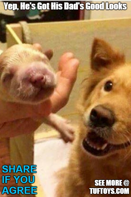 cute picture of proud new daddy dog suggesting his puppys good looks are attributable to him