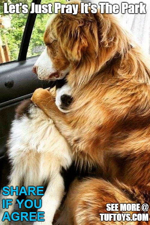 cute picture of two dogs comforting each other over potential visit to the vet