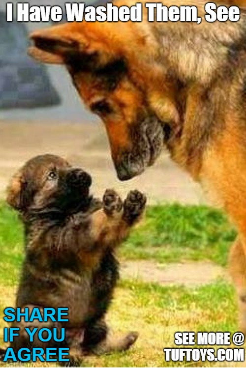 cute puppy showing paws to mother