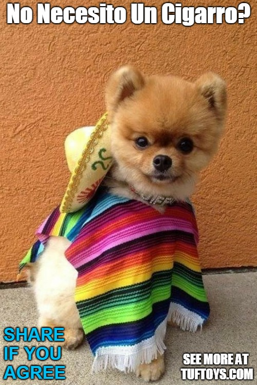 cute puppy wearing a poncho and sombrero wondering if the look could be improved with a cigar