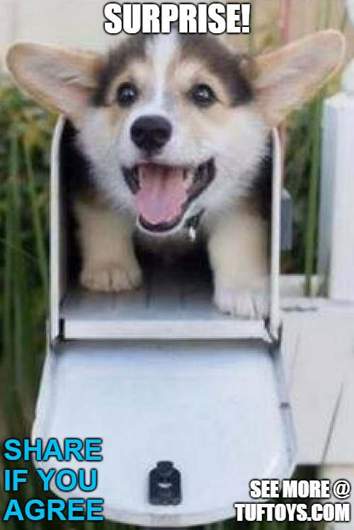 dog in mail box