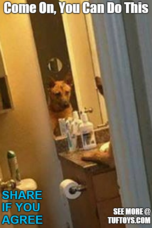 dog psyching himself up in the mirror