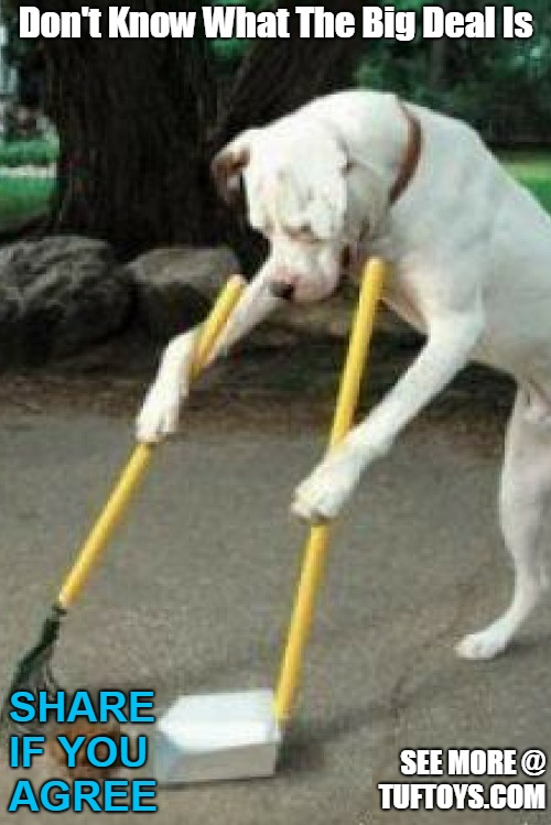 dog sweeping own poop