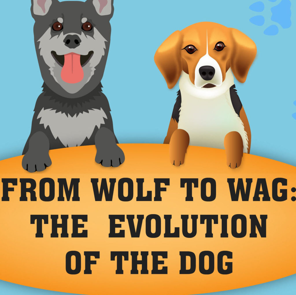 The evolution of wolf to dog