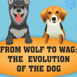 The Evolution Of Dogs Infographic