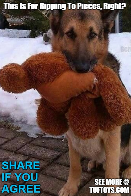 funny dog about to savage a teddy bear