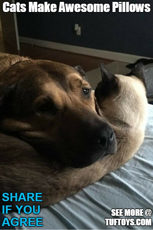 funny dog picture of dog using cat as pillow