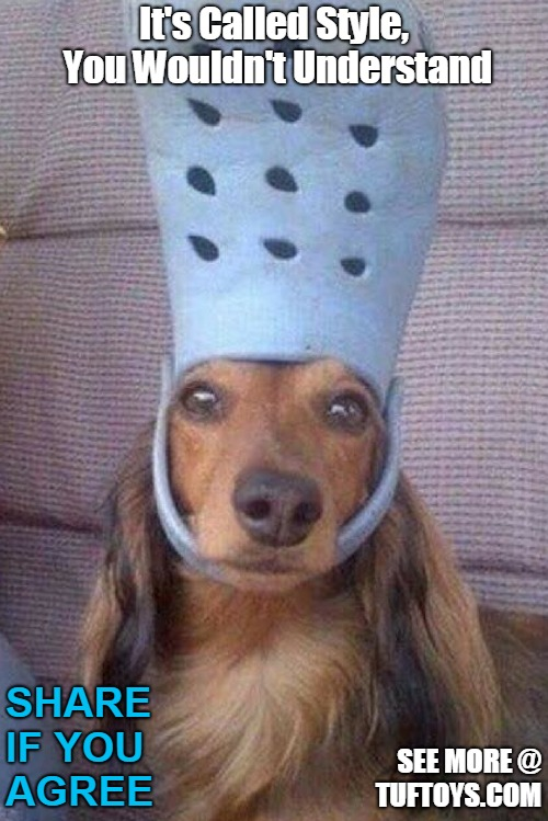 funny picture of a bemused dog trying to justify a large croc sandal on his head