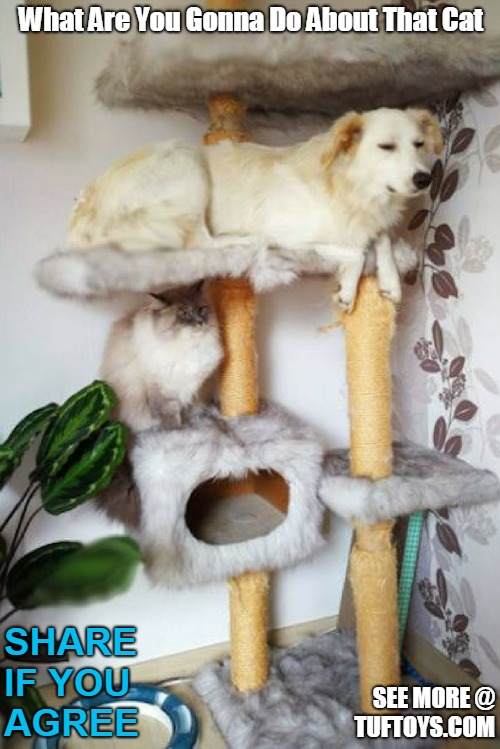 funny picture of a dog hogging a cat tree with a bemused cat looking on