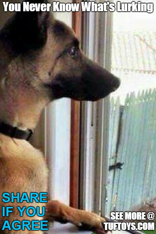 funny picture of a german shepherd taking his watchdog duties a little too seriously