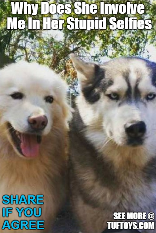 funny picture of annoyed looking dog forced into another pointless selfie by his girlfriend