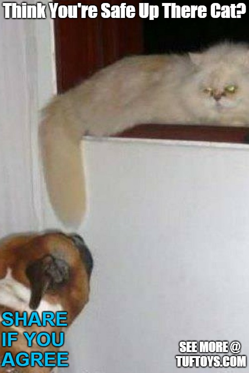 funny picture of cat about to get a rude awakening courtesy of a carelessly dangling tail