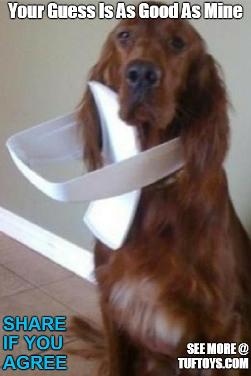 funny picture of cute dog with bin top on his head