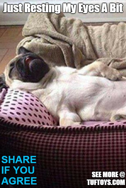 funny picture of dog collapsed on his back on a sofa looking unlikely to move any time soon