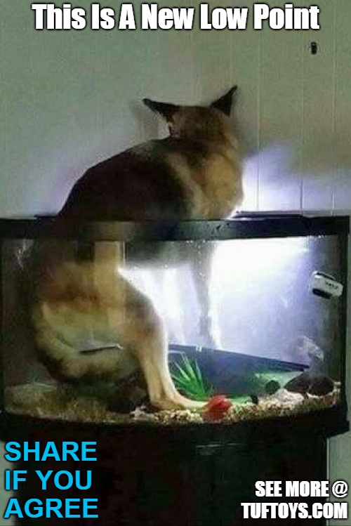 funny picture of dog falling through top of fish tank and contemplating how his life got to this point