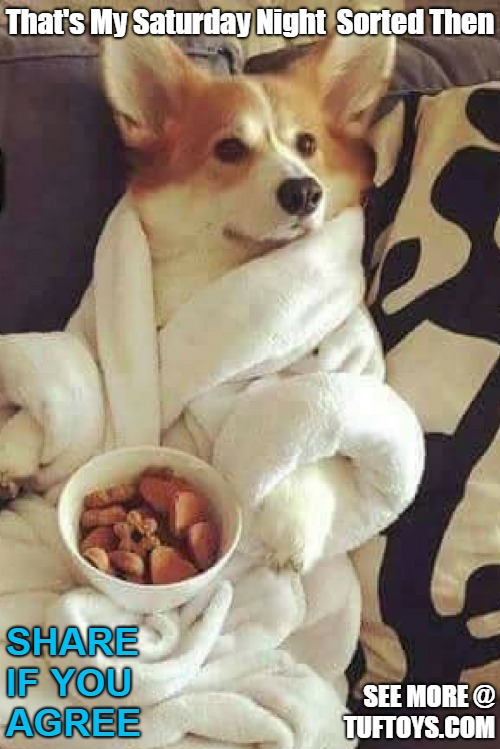 funny picture of dog in dressing gown ready for lazy night in